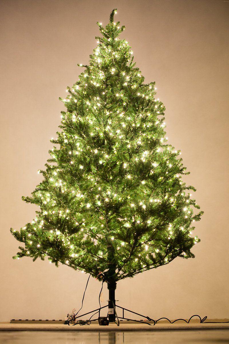 Holiday Bright Lights 9 Feet Tall Natural Fraser Fir ...