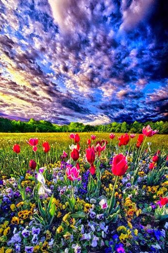 The Most Beautiful Things Community Google Beautiful Nature Nature Pictures Mother Nature