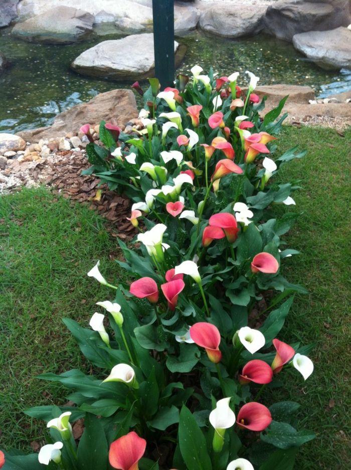 1001 ideas para jardines con m s de 90 fotograf as m m for Decoracion de jardines con plantas