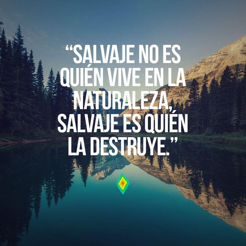 Salvaje No Es Quién Vive En La Naturaleza Salvaje Es Quién