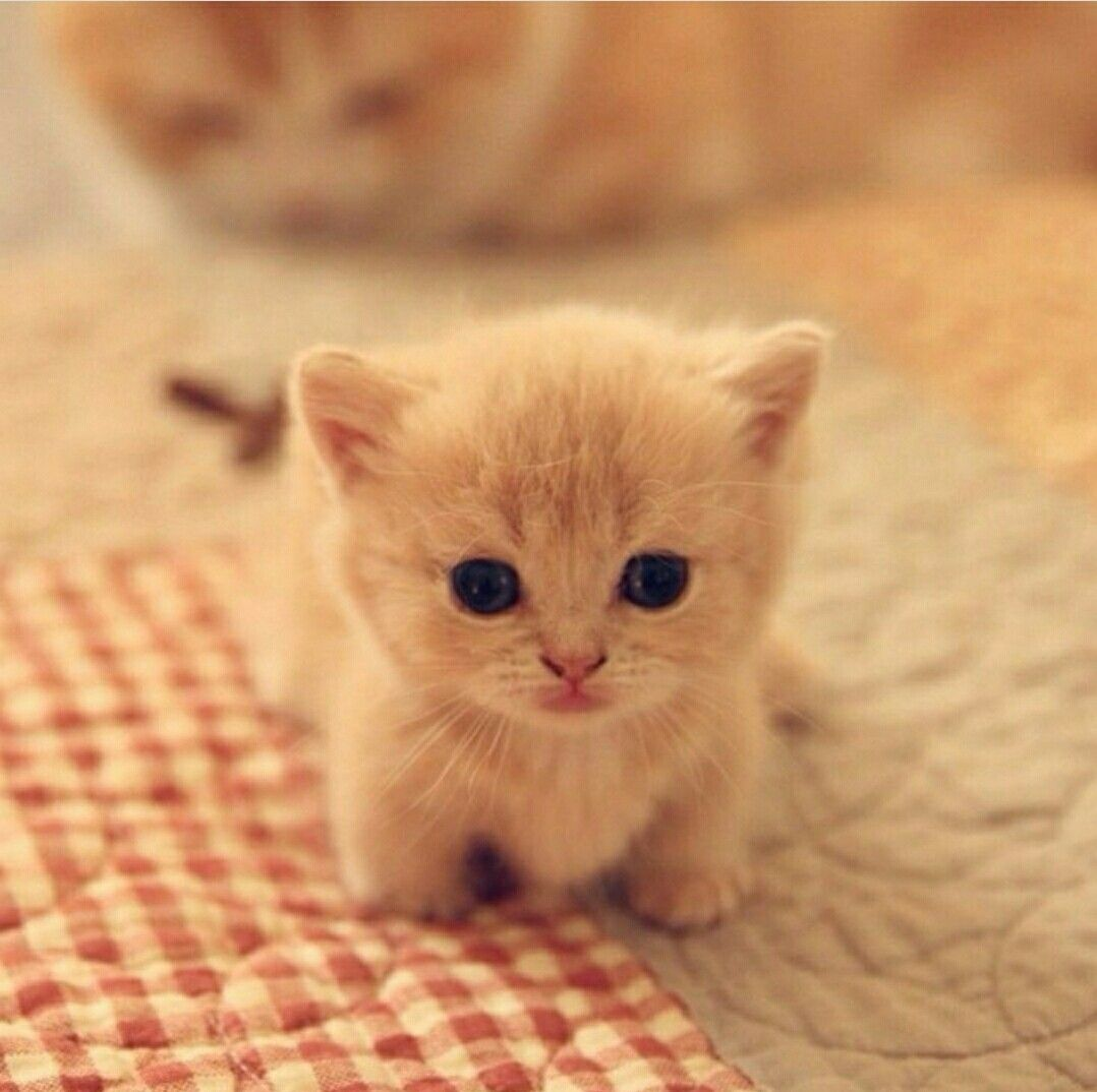Sooo Cute Baby Cats Kittens Cutest Cute Baby Animals