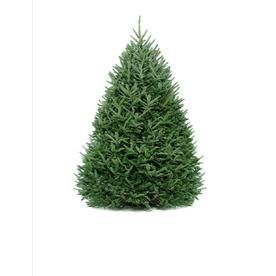 Lowes Fresh Christmas Trees.9 10 Ft Fresh Fraser Fir Christmas Tree 70091 Products In