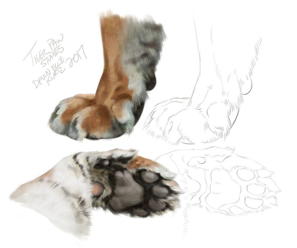 Tiger Paws By Tamberella Animal Sketches Animal Drawings Paw Art