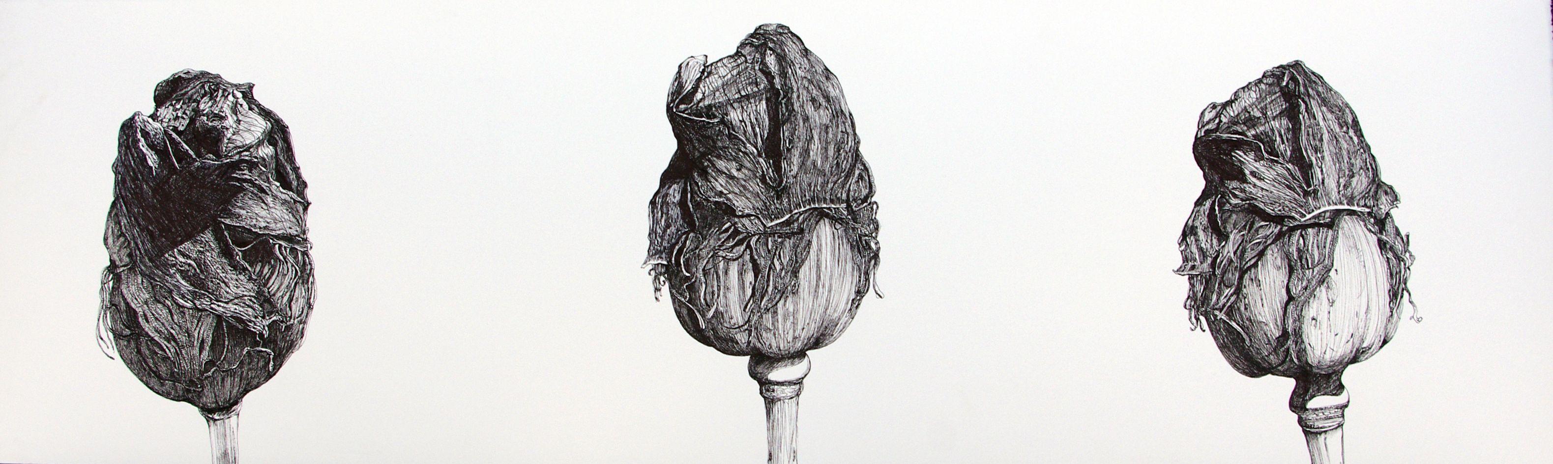 #Inés #González TÍTULO: Adormideras 1 • TÉCNICA: Tinta china sobre papel • TAMAÑO PAPEL/PLANCHA (cms):108x32/108x32 • EDICIÓN: Pieza única • http://www.a-cuadros.com/artistas/artista/208