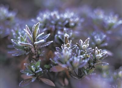 Shrubs+That+Grow+&+Bloom+in+the+Shade+
