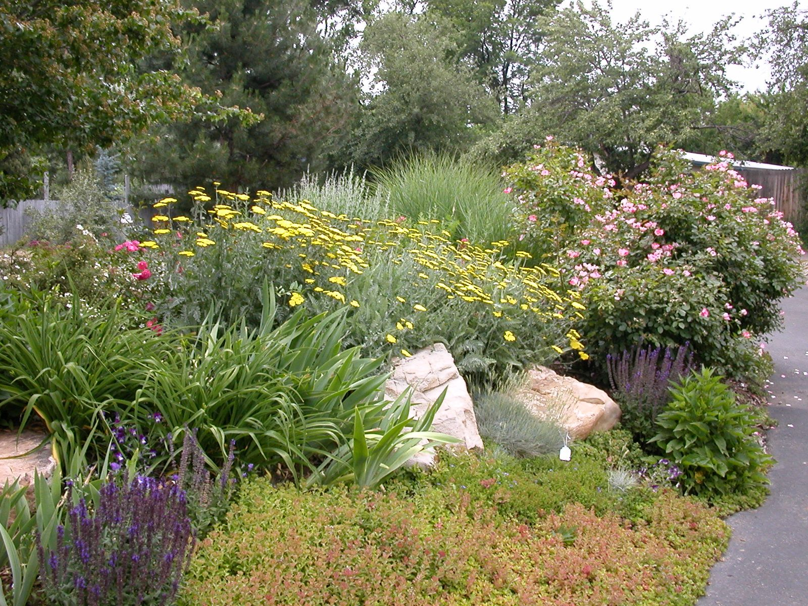 Water saving landscape pictures free water wise for Garden design with native plants