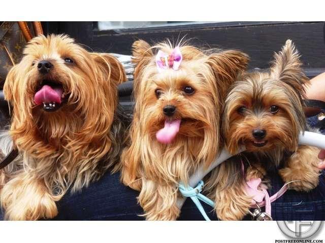 Dogs in Mumbai, Maharashtra, India in Pet Animals And
