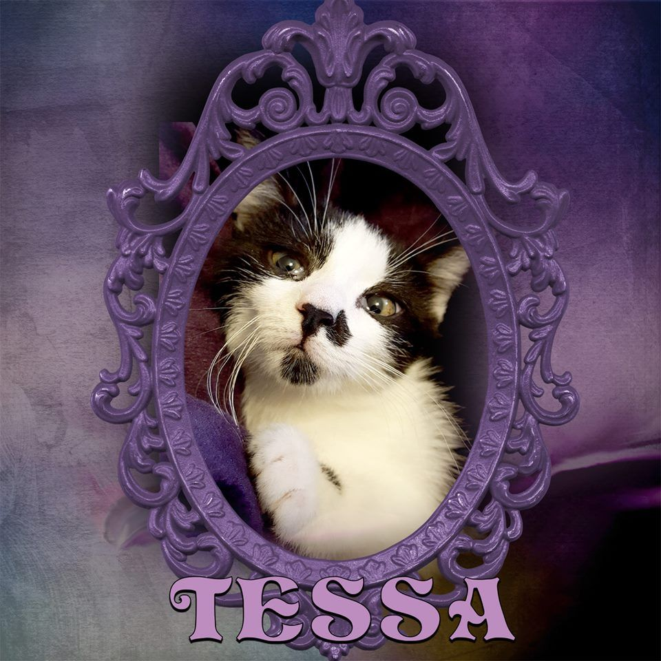 10 13 2016 Tessa Is A Gorgeous Girl That S Available For Adoption This Weekend Look At That Sweet Face You Ca Cat Adoption Kittens And Puppies Sweet Animals