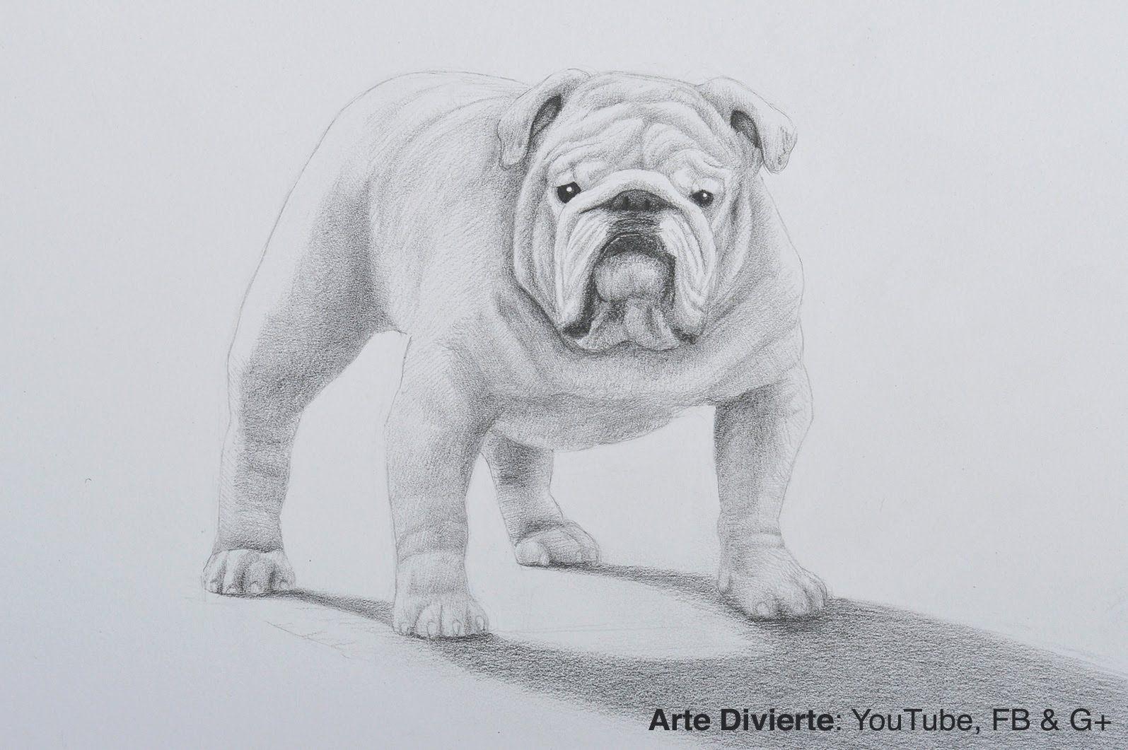 Como Dibujar Un Perro Bulldog A Lapiz Como Dibujar Un Perro Dibujo De Perro Como Dibujar Cosas