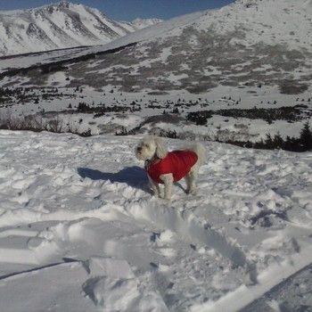 Wrigley, winter hiking at Chugach National Park, Alaska.