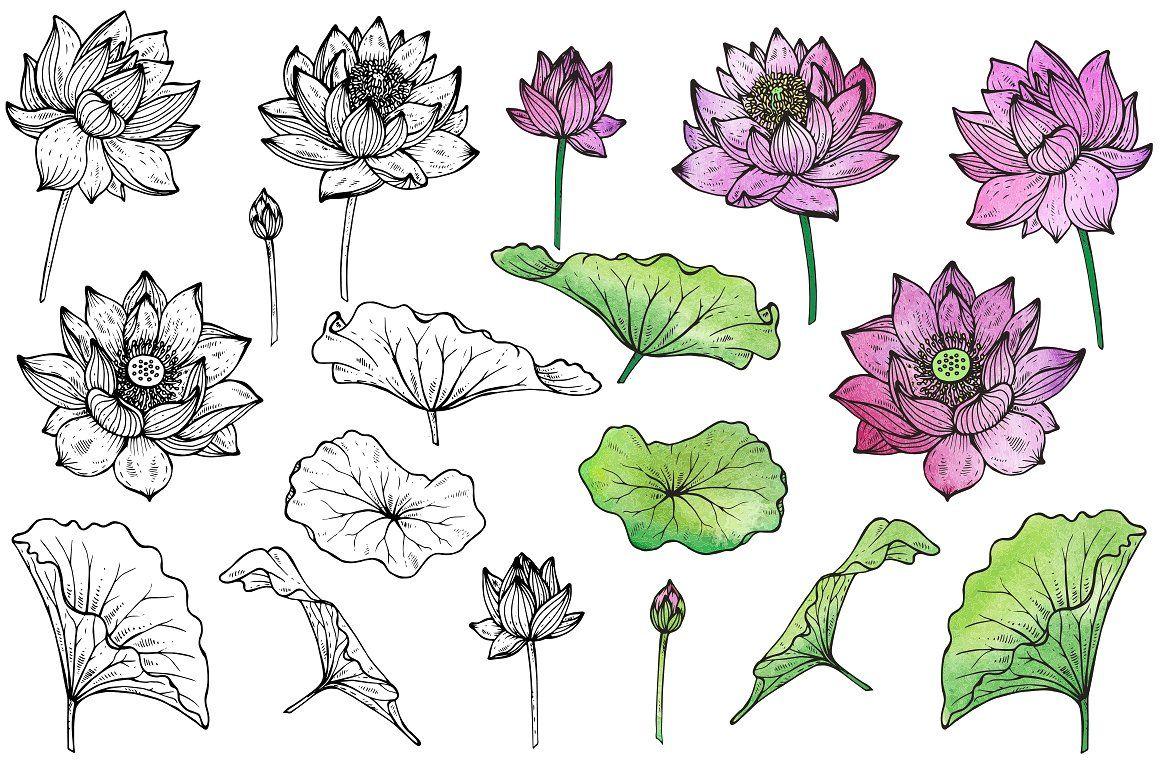 Hand drawn graphic lotus flowers hand drawn graphic lotus flowers by fancy art on creativemarket izmirmasajfo