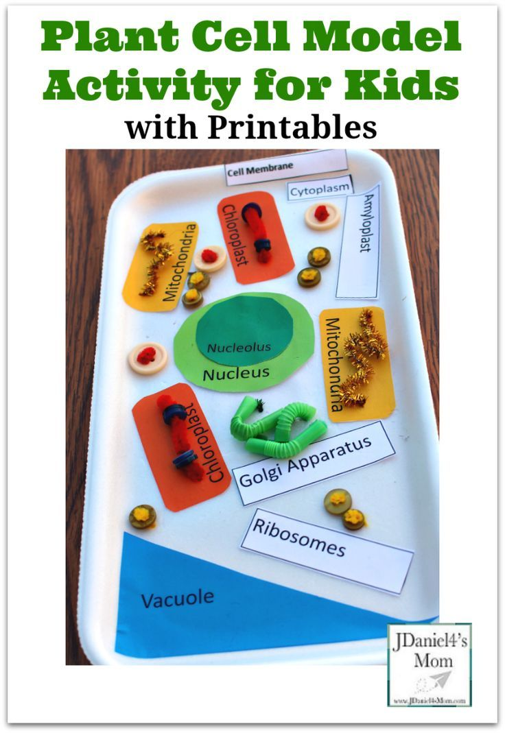 Plant Cell Model Activity For Kids With Printable Sections And Animal Diagram Science Pinterest Animals Labels