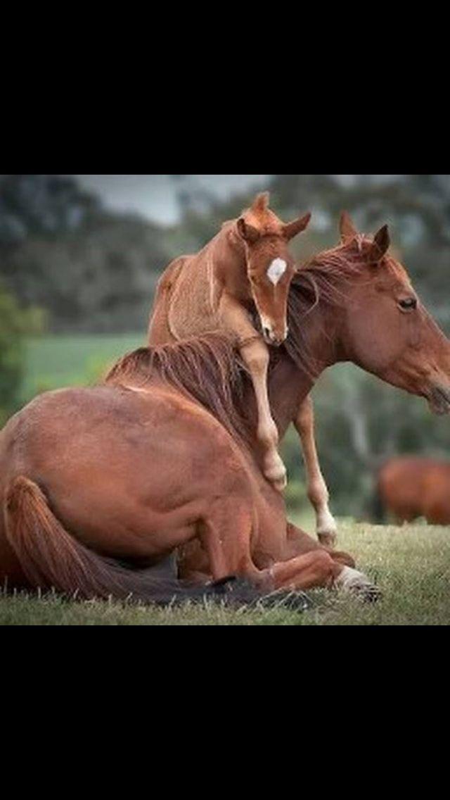 Cheryl Cooper Adlı Kullanıcının Horses Panosundaki Pin Pinterest