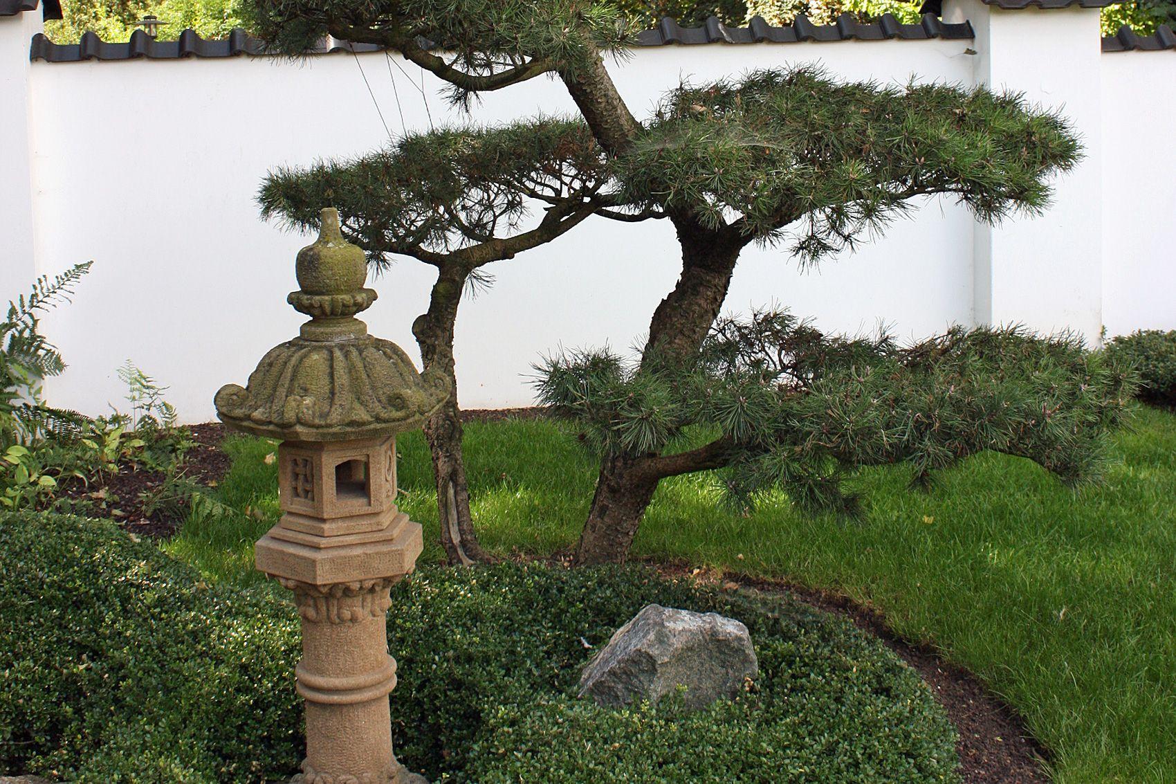 Pflanzen Mit Fernostlichem Flair Asia Und Japangarten Haben Eine Sehr Alte Kultur Hier Finden Sie Passenden Pflanzen Pflanzen Japanischer Garten Gartenarten