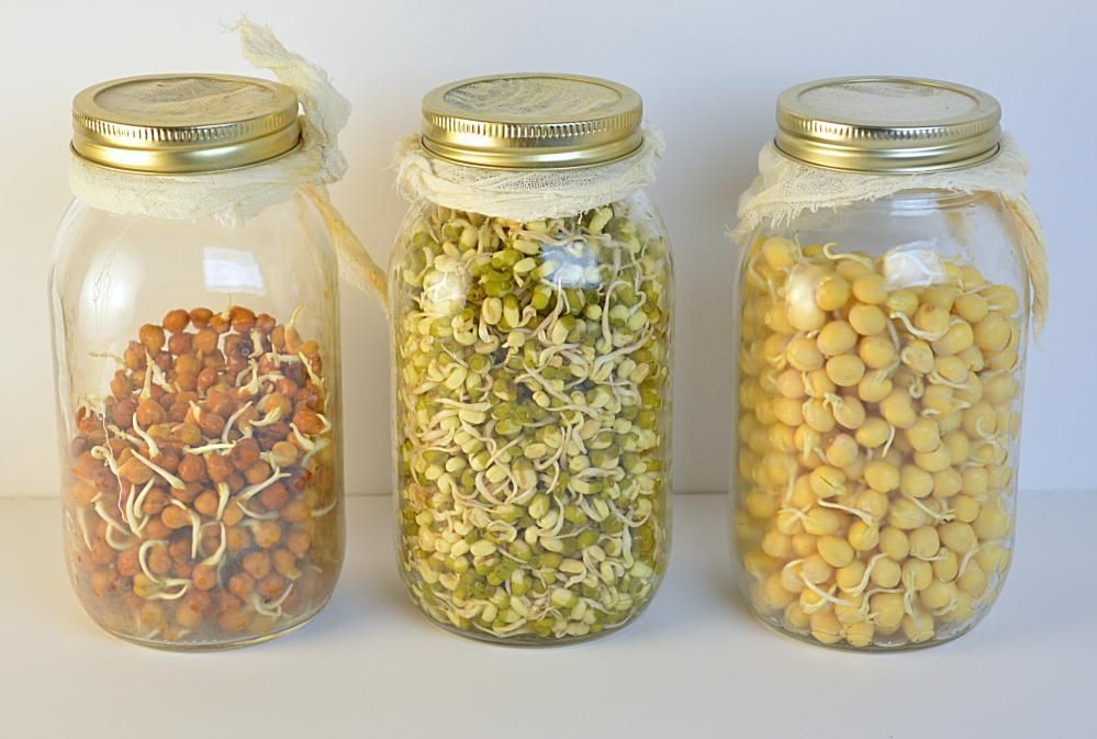HOW TO MAKE SPROUTS IN A JAR How to make sprouts