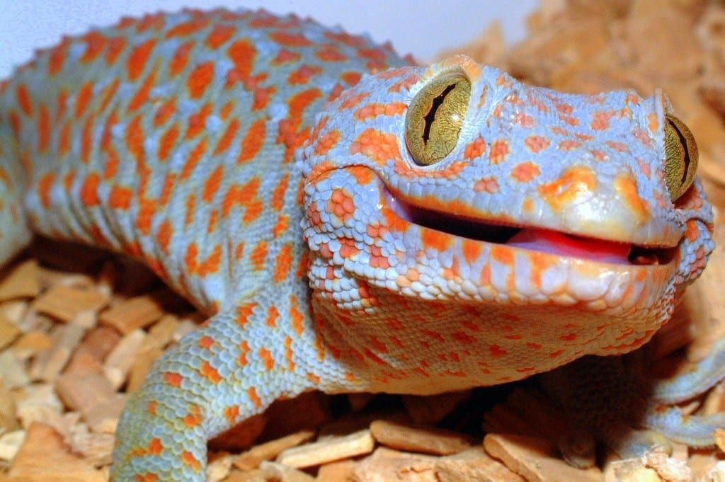 10+ Of The Most Dangerous Species On The Lizard