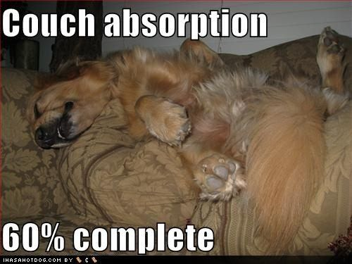 fuuny pictures of golden retrievers - Google Search