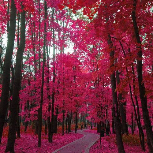 Pink lovely nature