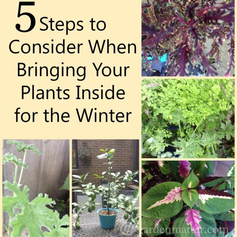 Bayberry Candles Good Luck for the New Year Indoor GardeningGardening TipsPlants IndoorContainer GardeningWinter