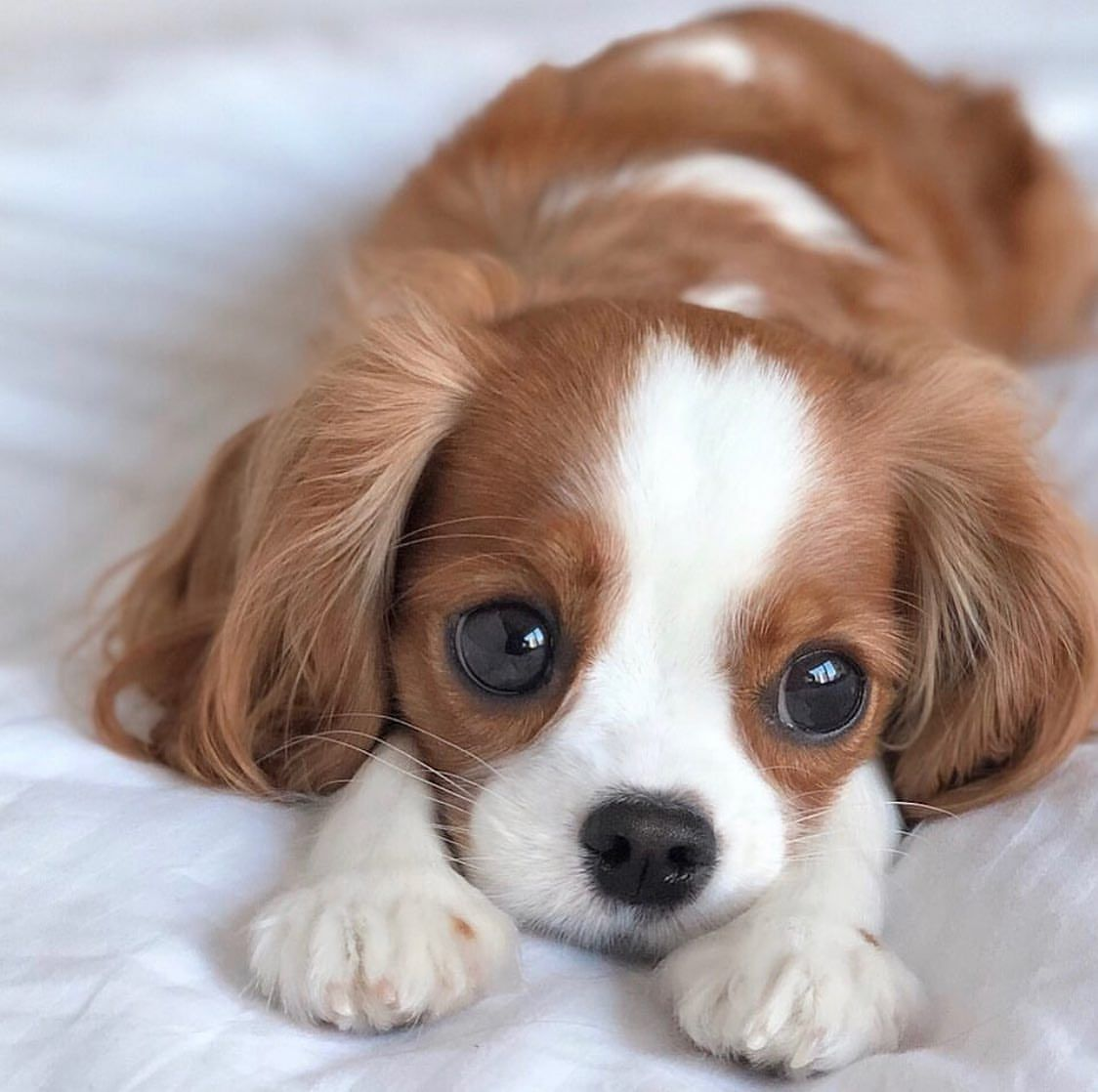So Adorable Dogs Dog Animals Animal Pets Baby Animals Super Cute Cute Dogs And Puppies Cute Puppy Pictures