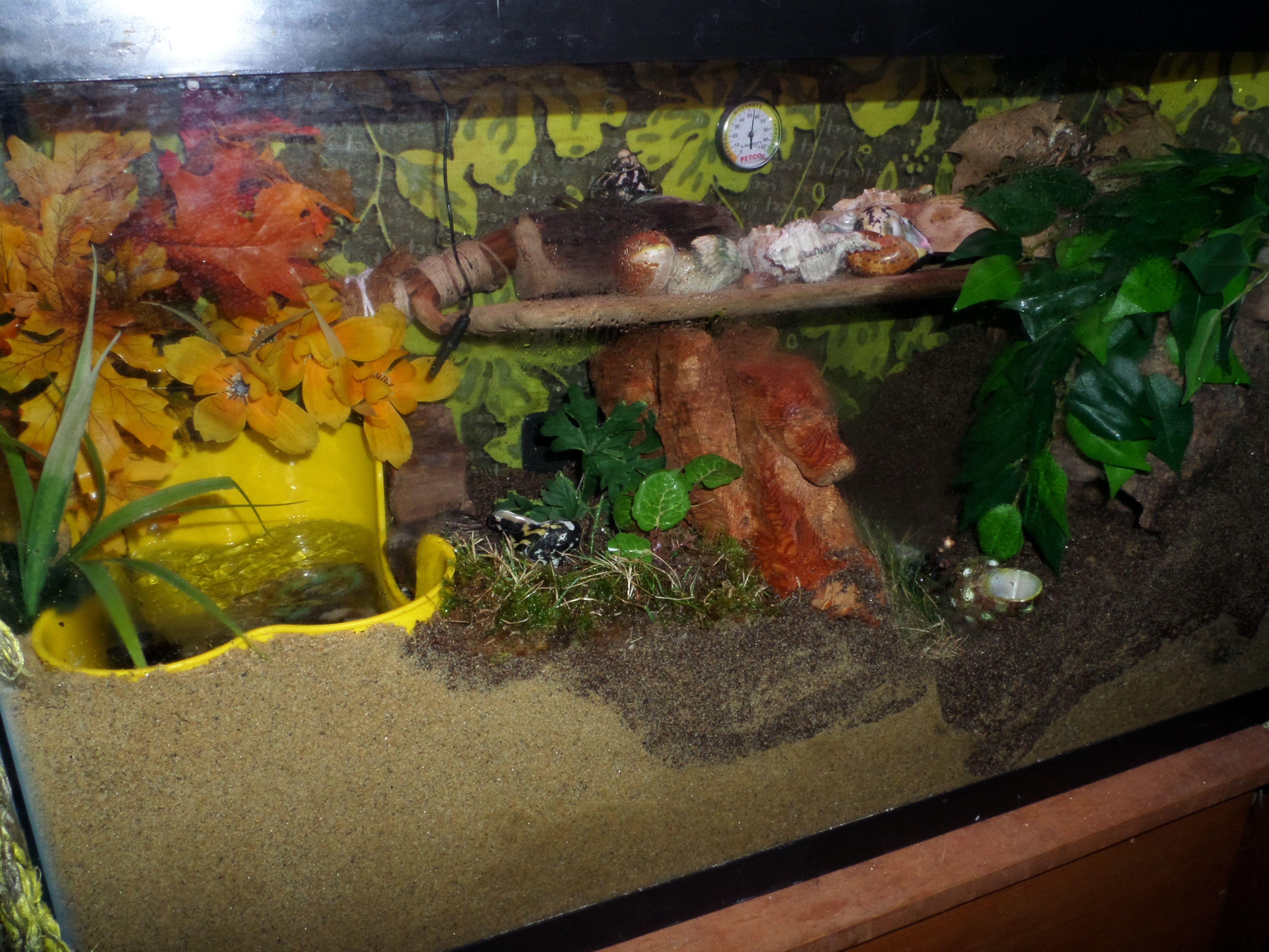 Pin By Lynn Soper On Hermit Crab Photos I Like Hermit Crab Habitat