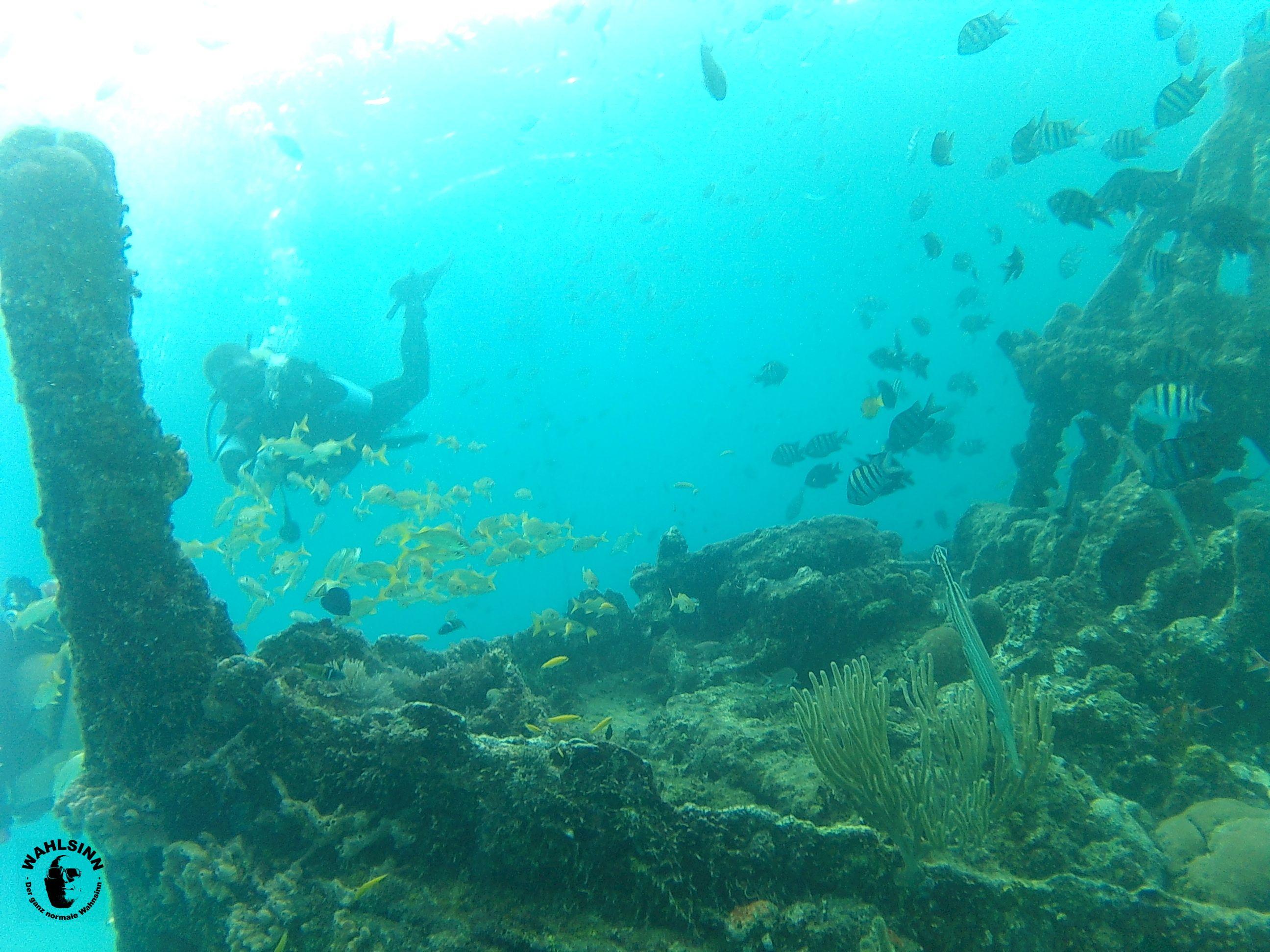 Barbados - Fische soweit das Auge reicht. An den Wracks wimmelt es gerade zu von Ihnen!