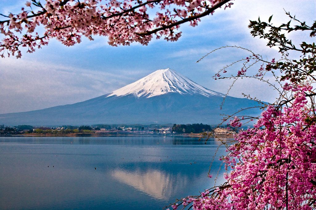 20 Best Places To Enjoy Sakura Cherry Blossoms In Japan Tsunagu Japan Cherry Blossom Japan Sakura Cherry Blossom Japan