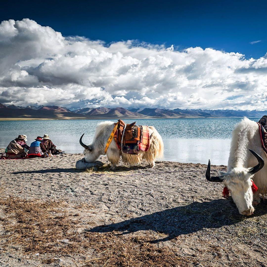 483 vindikleuks 5 opmerkingen nomadic tibet
