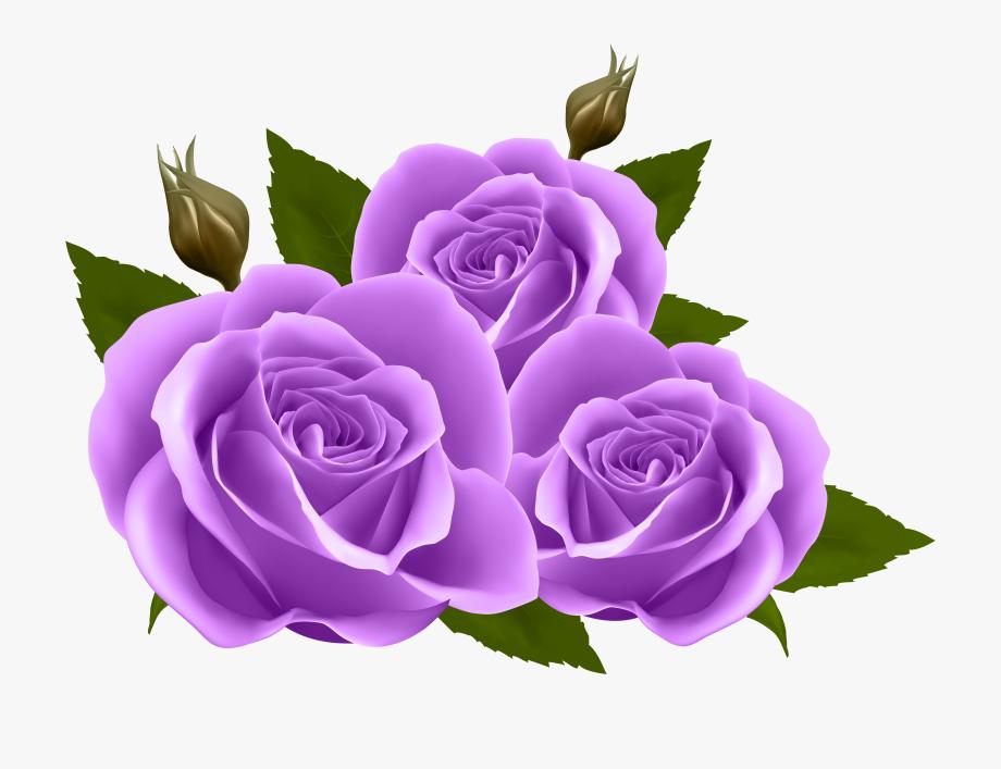 Purple Rose Clipart Transparent Background Transparent Purple Rose Clipart Purple Roses Flower Clipart
