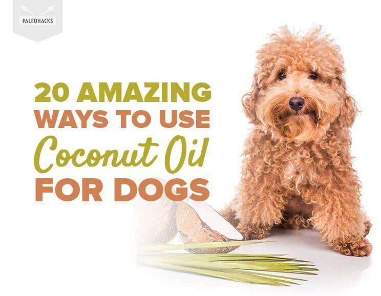 diy dog toothpaste no coconut oil