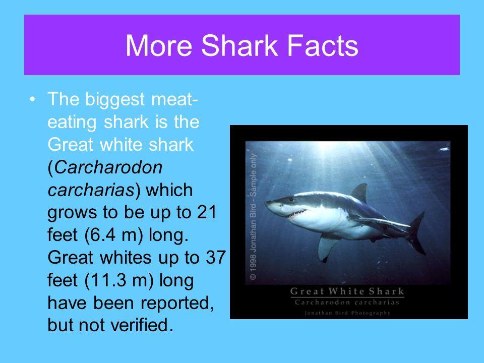 Necklace Carpet Shark Facts - Carpet Vidalondon