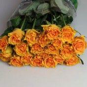 rose sphinx gold - 50cm 73p per stem