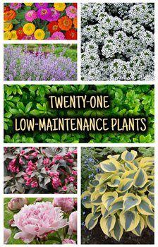Photo of Top 21 Low-Maintenance Plants for Your Garden   – Garden Design
