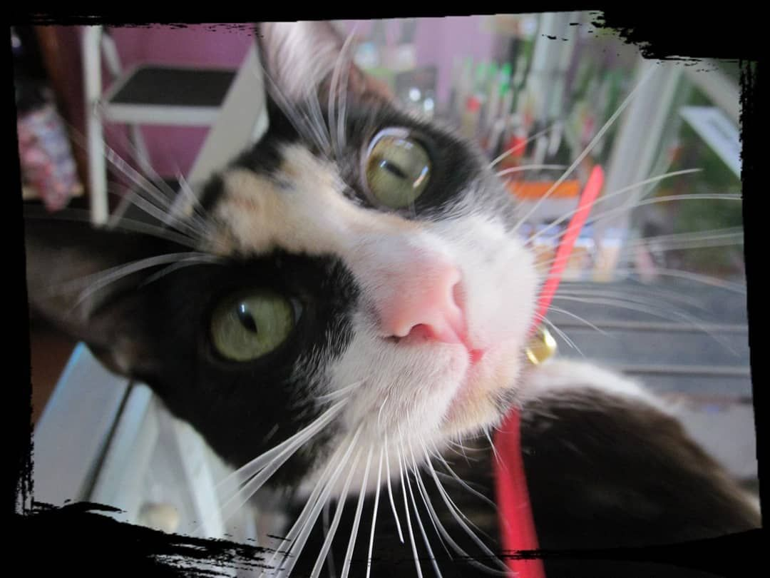 #gato #gata #cat #mascotas #petsofinstagram #pets #nice #cute #animals #animales #friends #pretty #beauty #tachiragram...