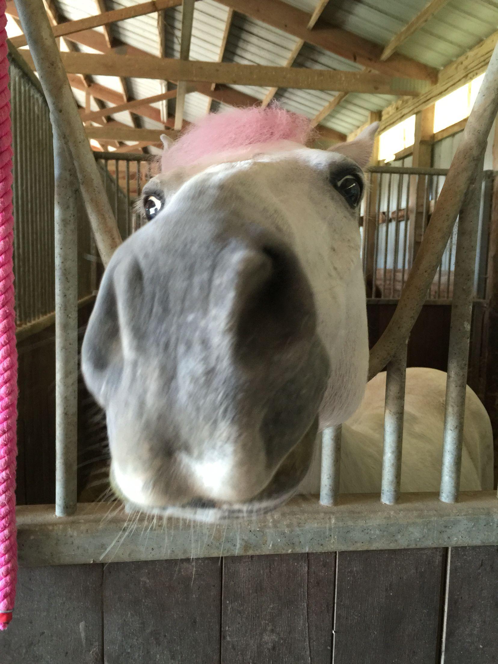 Rock star pony
