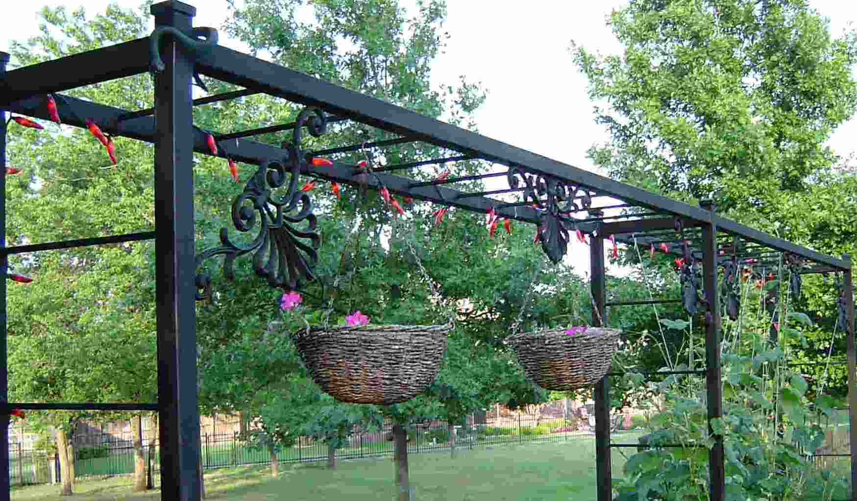 Grape Vine Trellis idea what I'd really like   Grape vine ...