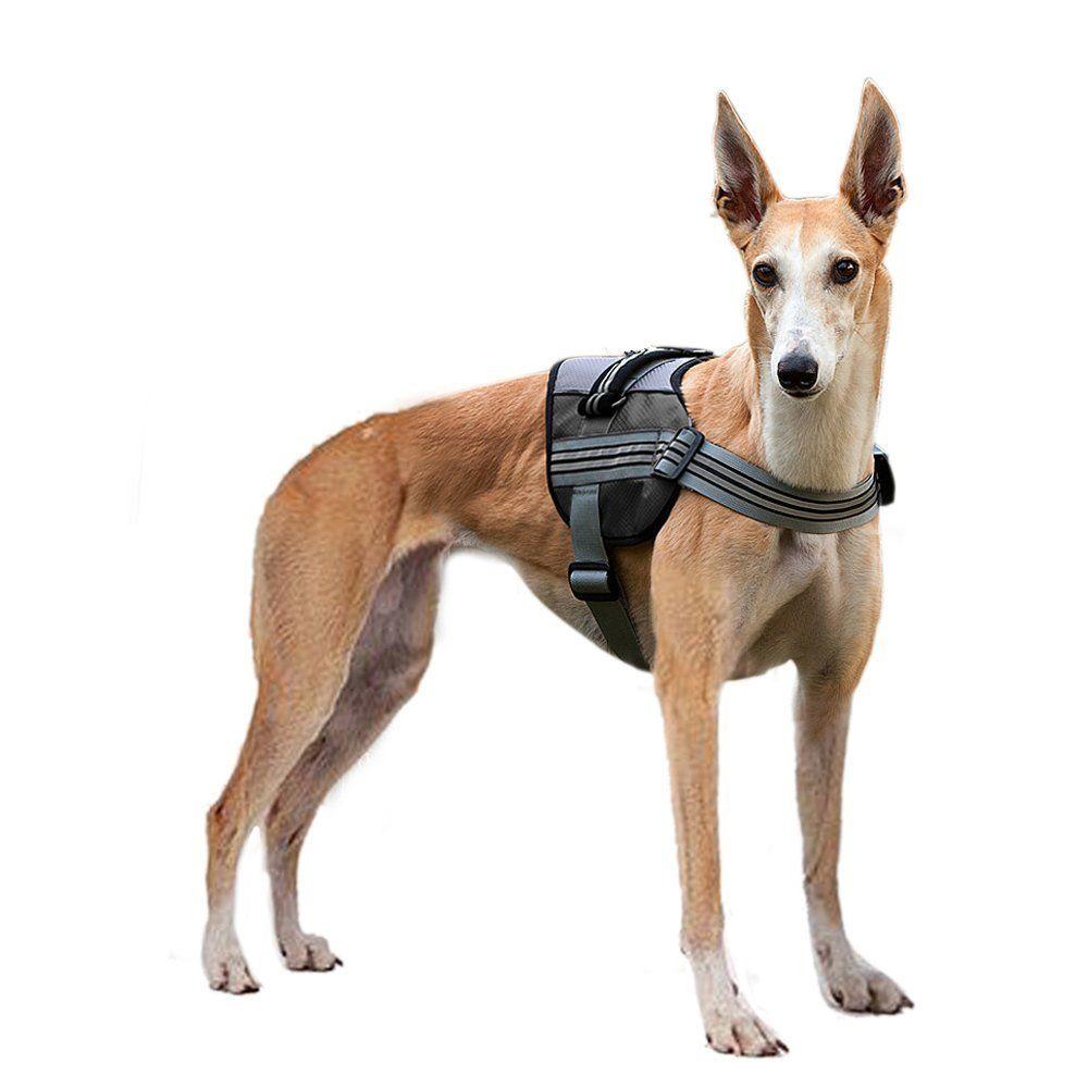 Dog Harness Pyrus Soft Reflective No Pull Dog Leash Padded Pet
