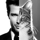 Des Hommes et des Chatons (Men and Kittens). Is it wrong that I prefer the cat picture about 99% of the time?