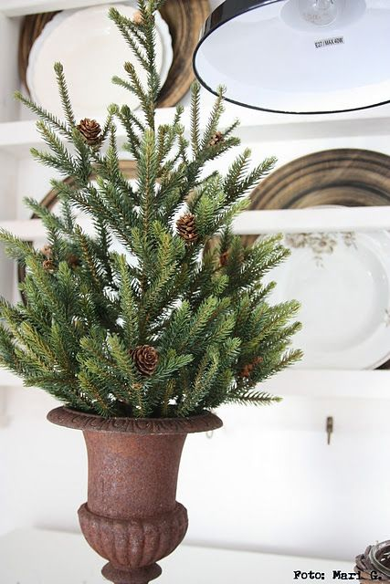 tiny Christmas tree in a rusty crusty urn Christmas Pinterest