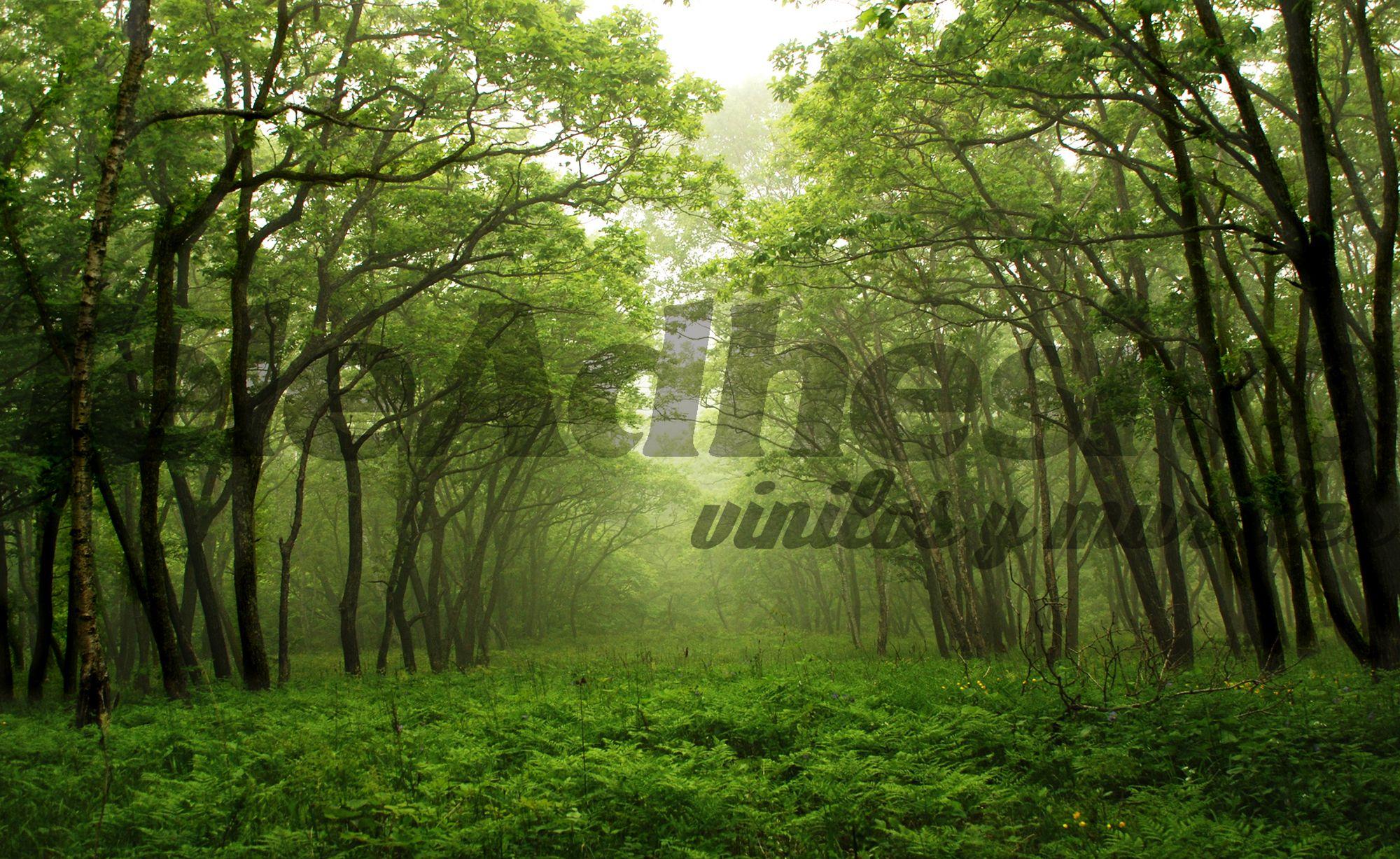 Papier peint vinyle Greenwood | Papier peint paysage