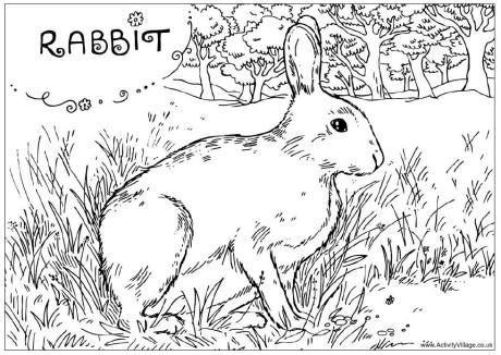 rabbit coloring pages printable enjoy coloring - Rabbit Coloring Pages