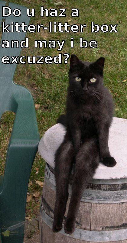 Very Polite Cat | Cat memes, Funny cat memes, Cats