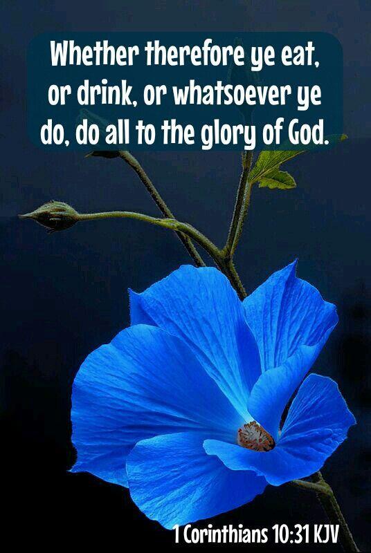 1 Corinthians 10:31 KJV