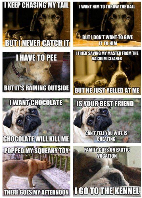 funny dog pictures with memes | Funny Dog Meme 400x270 Jpg - kootation.com