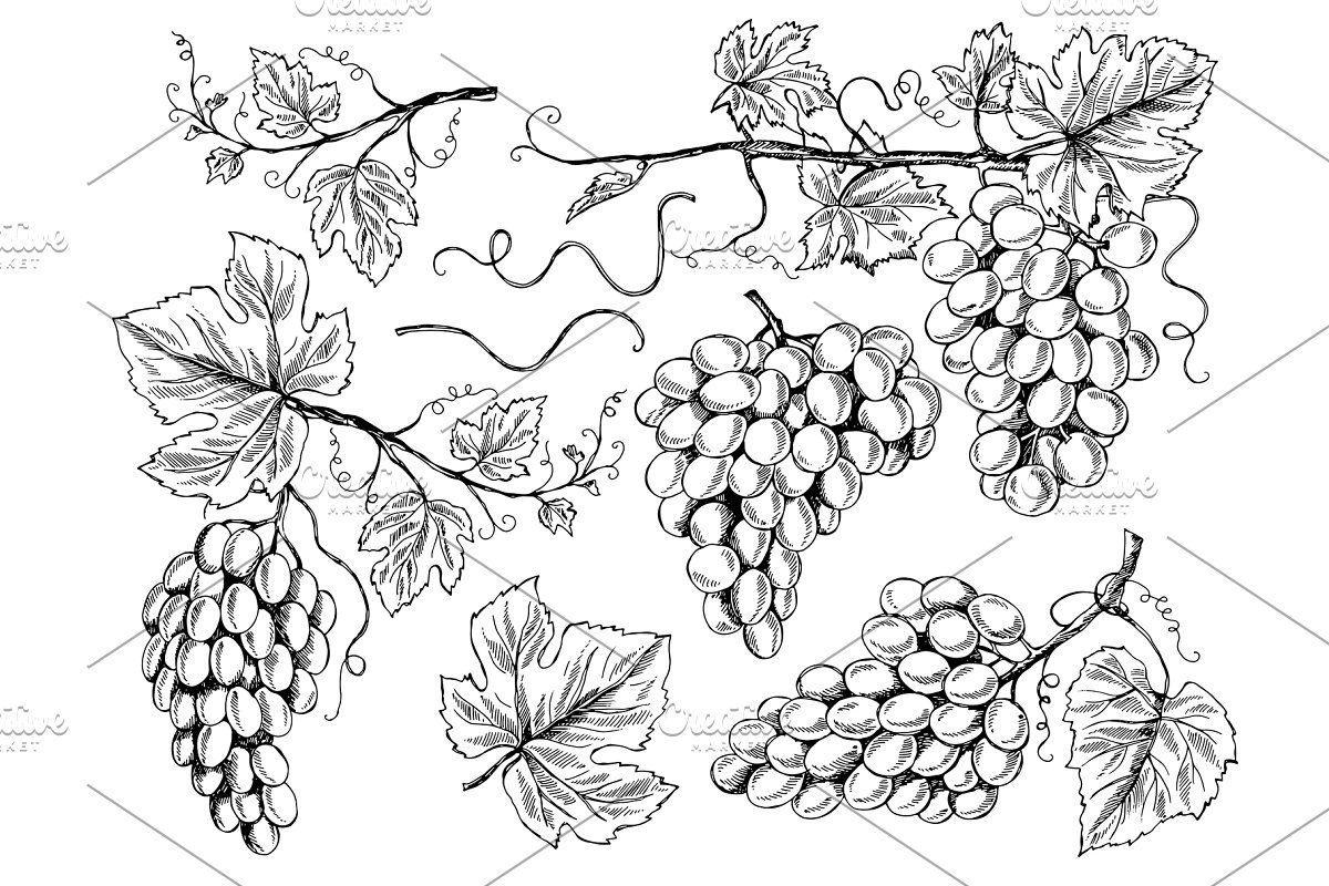 34++ Grape vine outline clipart info