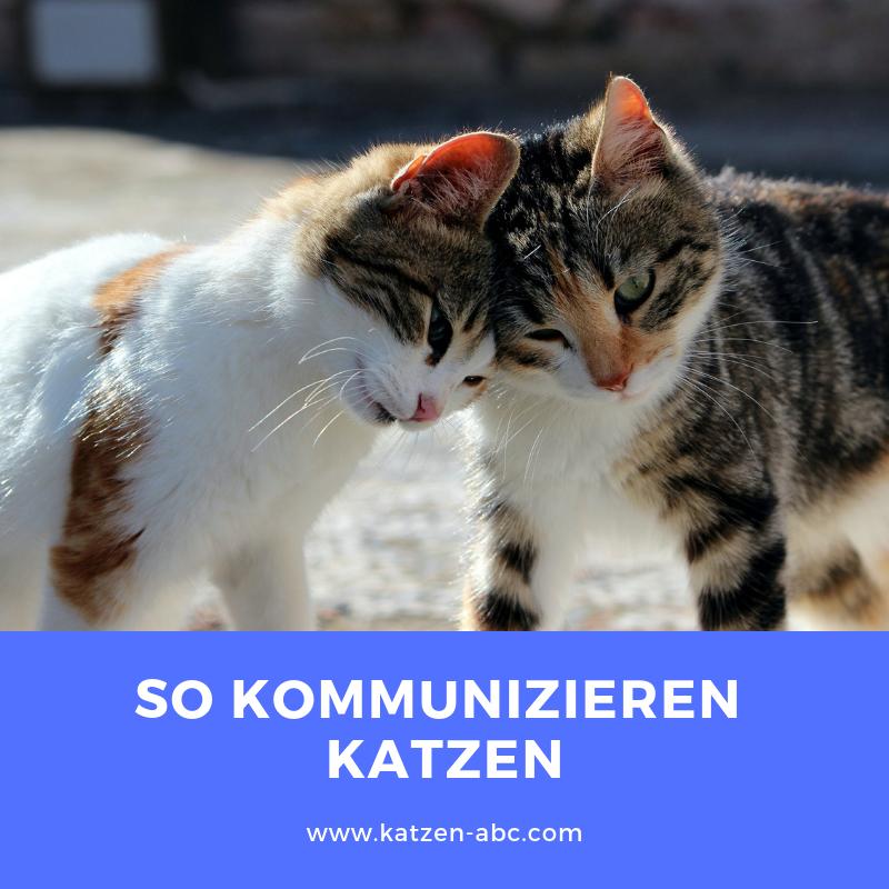 So kommunizieren Katzen | Katzen, Katzen sprache, Katzen