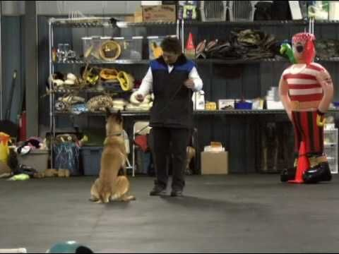 Why Engagement Is Important In Dog Training Dog Training Dogs