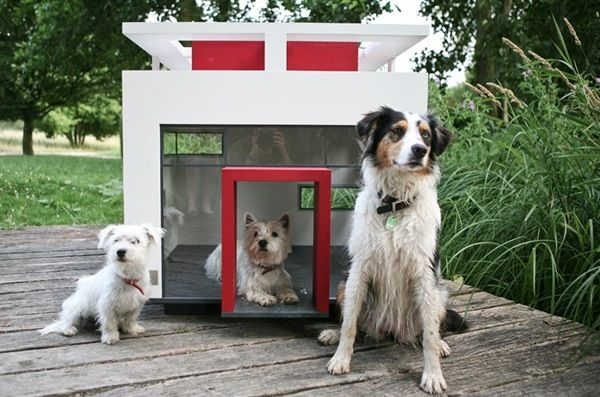 Craigslist One Bedroom For Rent Only Cool Dogs Need Apply Dog