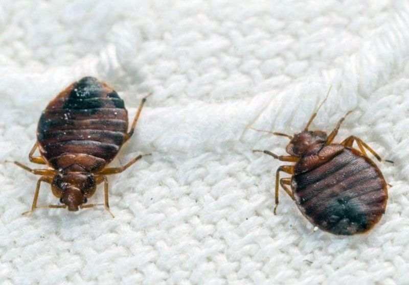 Pin By Hurghada Excursions On Home Services In 2021 Bed Bugs Infestation Bed Bug Bites Pest Control