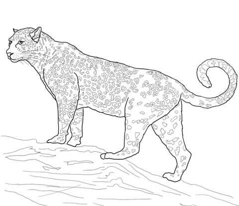 Jaguar Big Cat Coloring Page Free Printable Coloring Pages Cat Coloring Page Animal Coloring Pages Coloring Pages